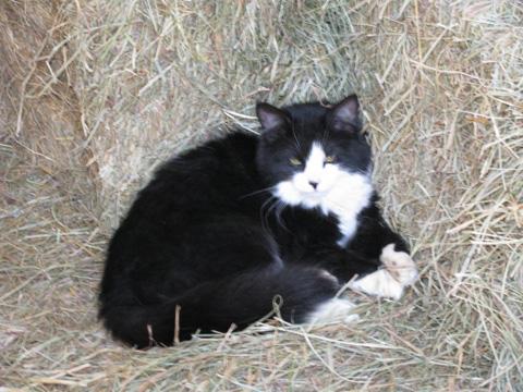 Bonnie the Barn Cat